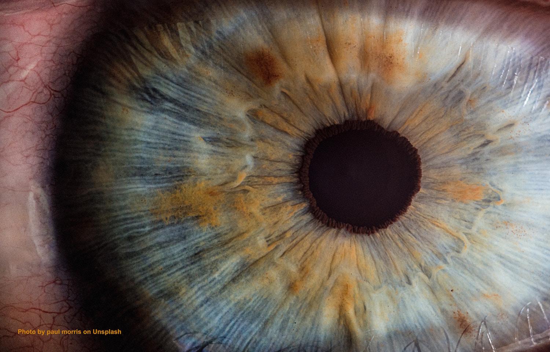 Augen Detail